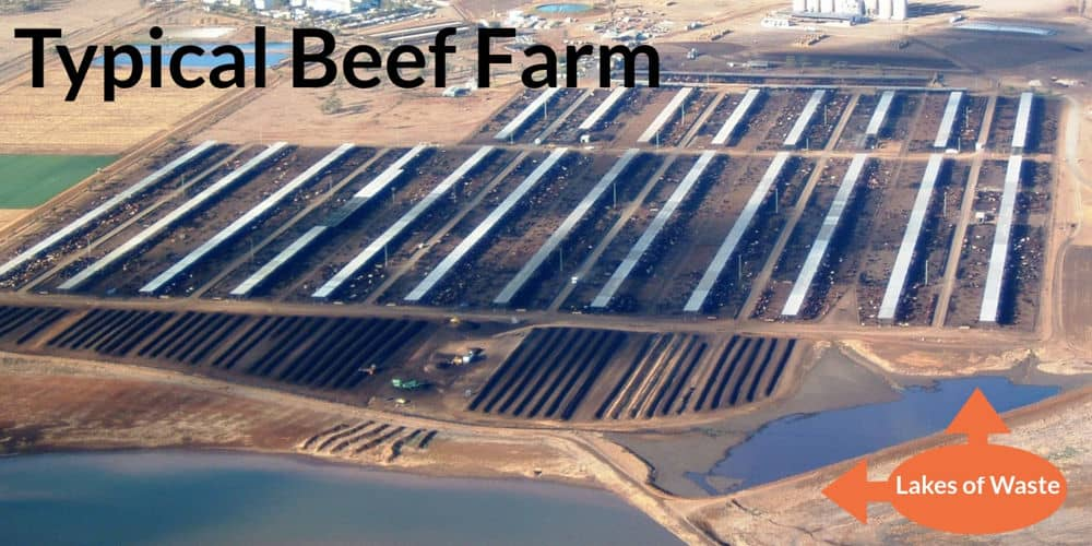 Image of typical beef farm
