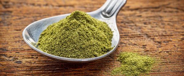 Spoon of wheatgrass powder